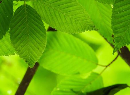 Tijd doorbrengen in de natuur bevordert de gezondheid
