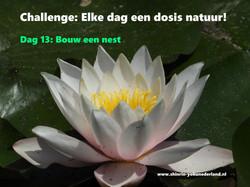 Challenge dag 13: Bouw een nest