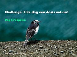 Challenge dag 6: Vogelen