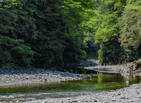 Drie manieren om rust te vinden in het bos