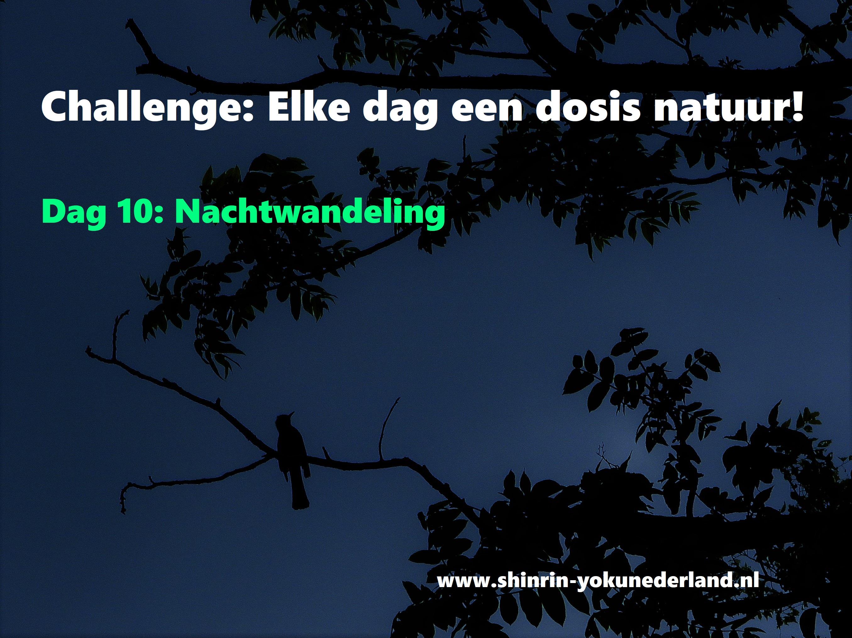 Challenge dag 10: Nachtwandeling
