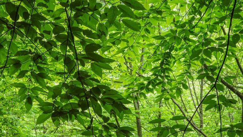 Vijftig tinten groen