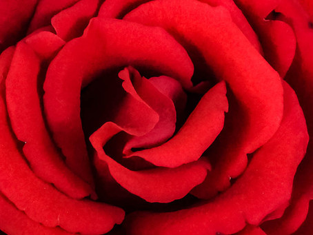 Wetenschap bevestigt: you should stop and smell the roses