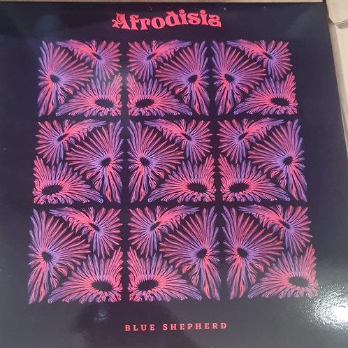 BLUE SHEPERD AFRODISIA