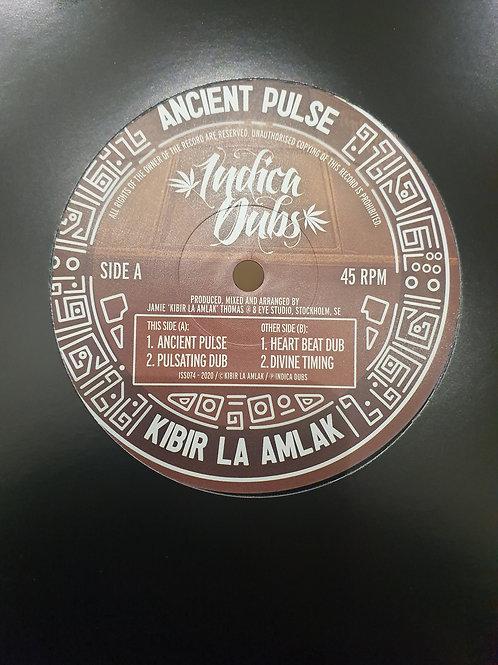 """ANCIENT PULSE KIBIR LA AMLAK INDICA DUBS 10"""""""