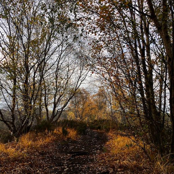 WALK Poetry Walk on Lindow Moss with Anthony Jones and Estelle Price
