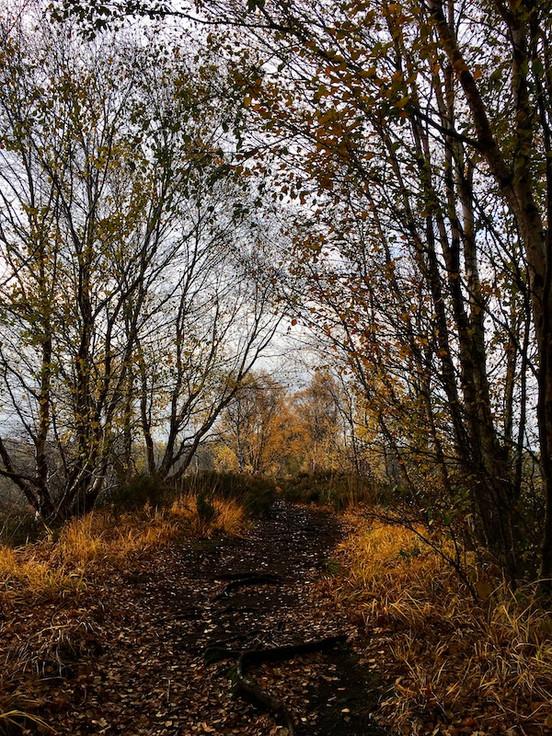 Lindow Moss Autumn