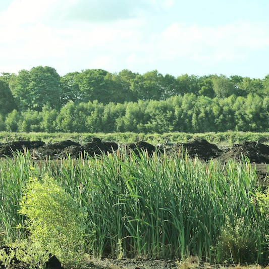 TALK Common Ground: The Nature of Wilmslow's Countryside with Professor John Handley