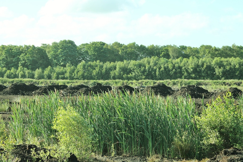 Lindow Moss in Spring