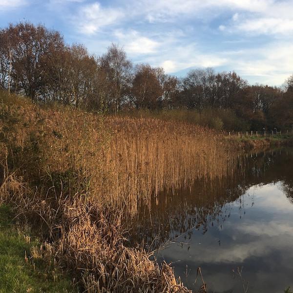 WALK Wilmslow's Natural Landscape with Professor John Handley
