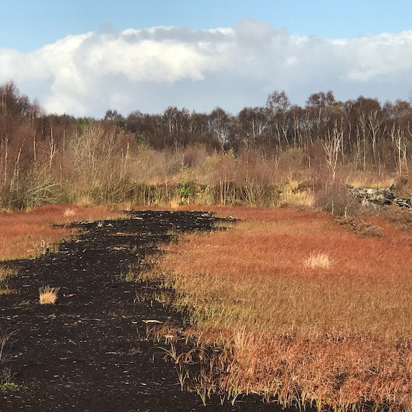 TALK Lost in the Bog.  Peatlands Past, Present and Future with Professor Ian Rotherham