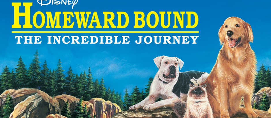 6 Dog movies every animal lover needs to see