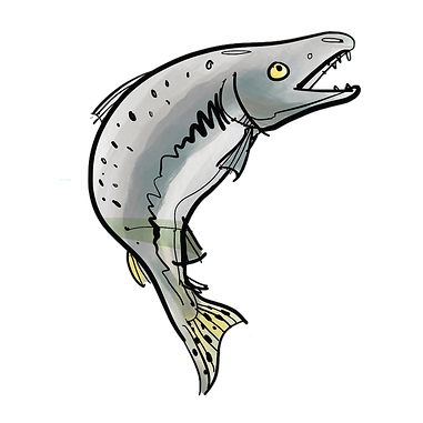 Salmon PNG .png