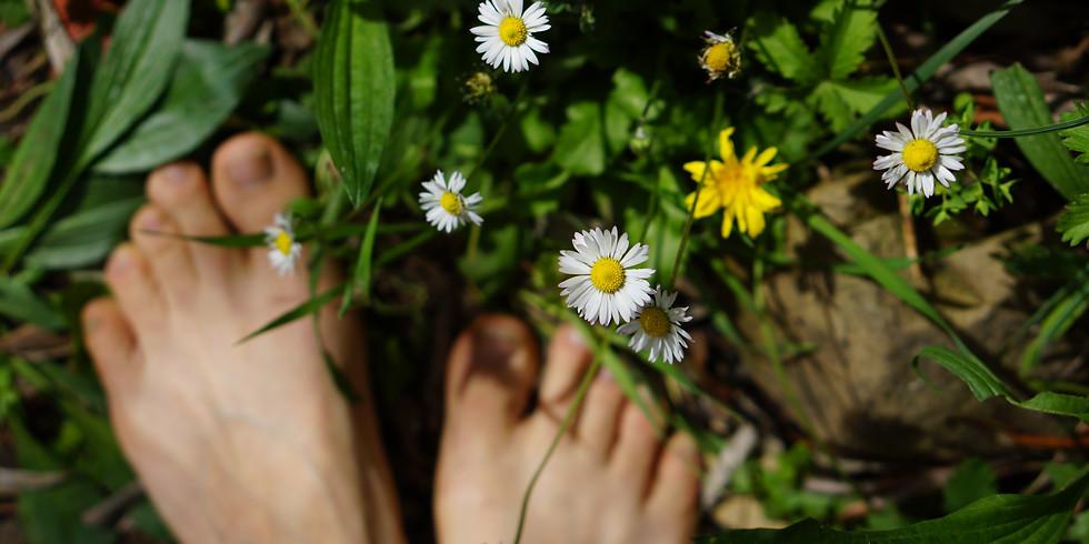 Journée en pleine Nature à la rencontre intuitive des plantes sauvages