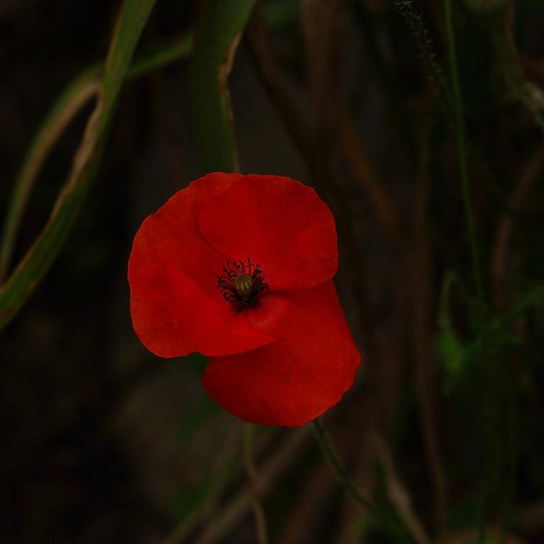 Rêver les plantes sauvages (replay)