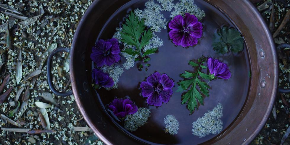 Plantes protectrices du Féminin sous la Pleine Lune