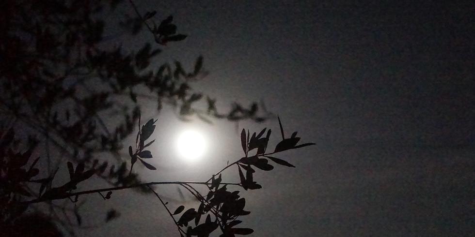 Accueillir la nouvelle Lune avec les plantes médicinales