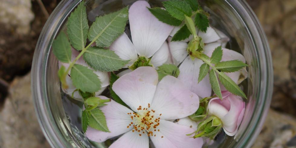 Plantes protectrices du Féminin