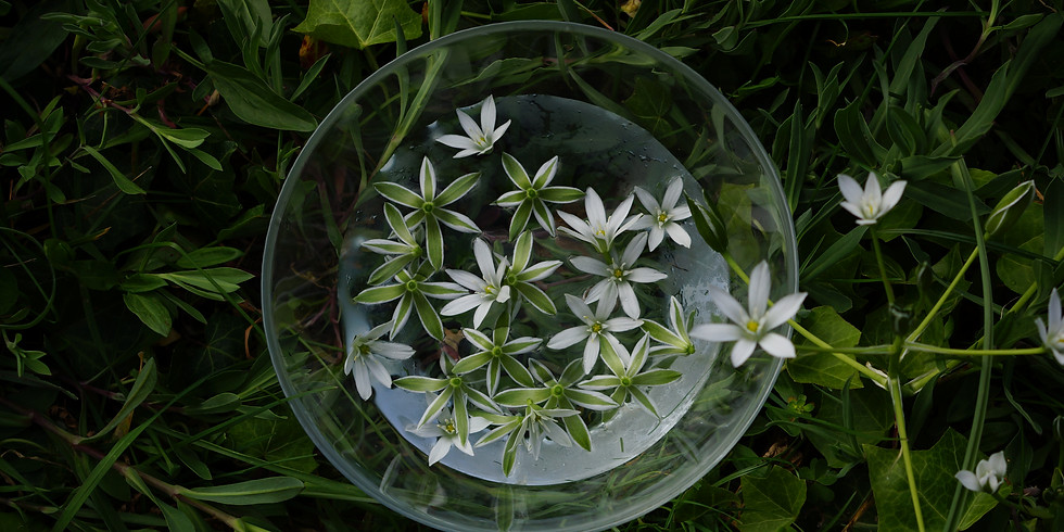 Plantes protectrices