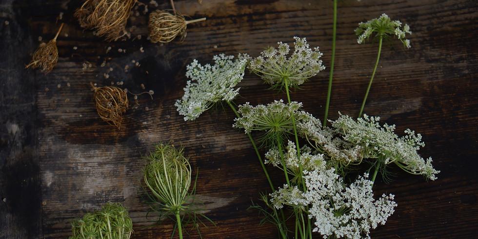 Accueillir l'Automne avec les plantes sauvages