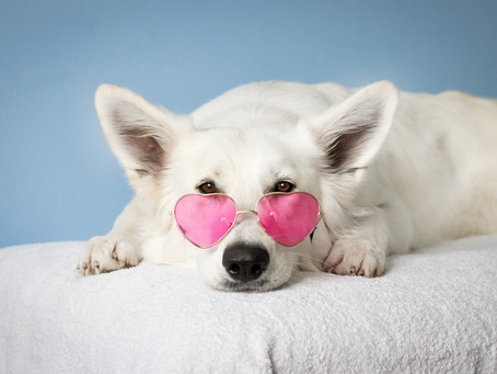 I'm Not Like Other Girls, I'm A Dog with Sunglasses
