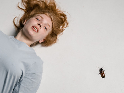 New Diet to Avoid Eating: Just Dead Cockroach In Kitchen