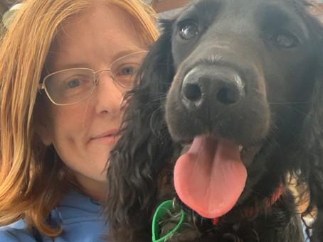 A dog's life at Big Brown Paws