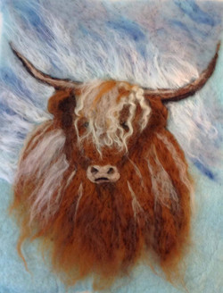 highland cow 2015