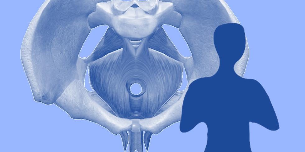 Atelier du corps : le perinée