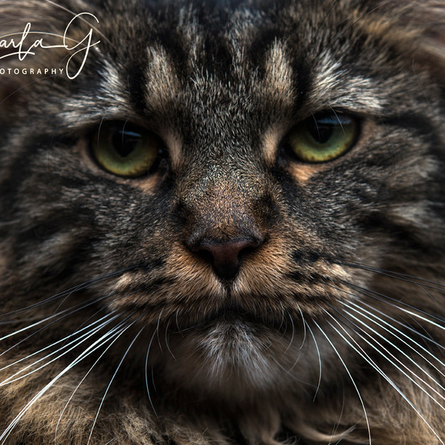 Whiskers!