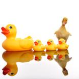 All the ducks on a row.