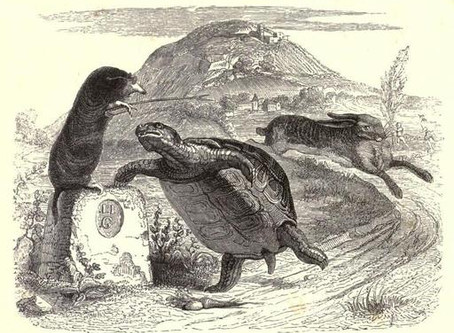THE AUCTION TORTOISE AND HARE