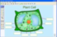 PlantCell.jpg