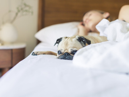Those who snore always fall asleep first… and are at sleep apnea risk