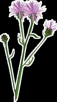 RWC Wild Flowers.webp