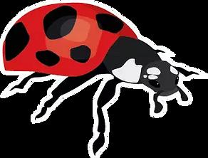 RWC Lady Bug.webp