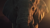 06_EaP_Elephant.png