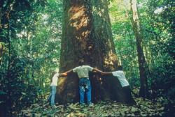 Cristalino Jungle Lodge - Love Brazil Nut Tree - Carol Da Riva