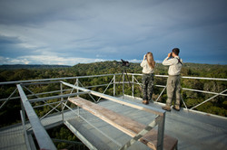 Cristalino Jungle Lodge - Ecotourists and view of Canopy Tower - Samuel Melim