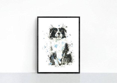 Border Collie Print