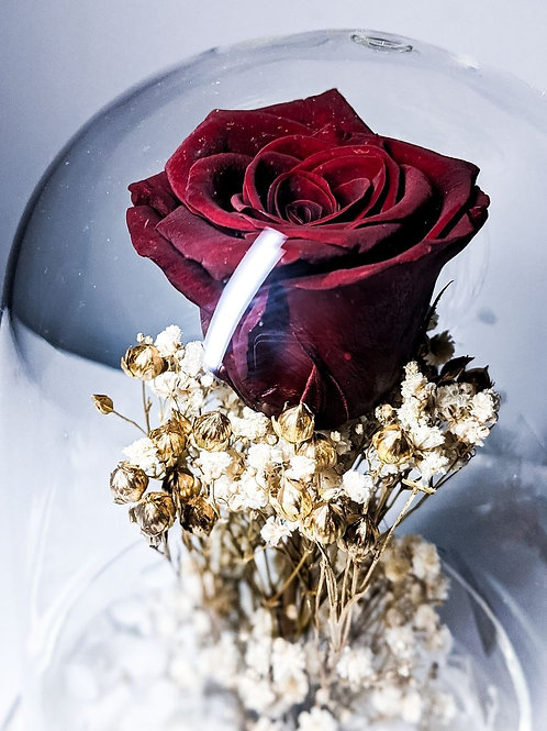 Preserved Rose in Glass Dome - Mohogany and Gold