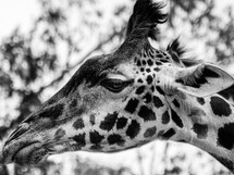 wildlife-41.jpg
