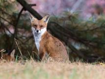 wildlife-13.jpg