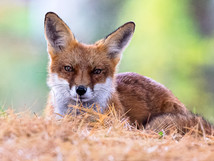 wildlife-12.jpg