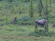 wildlife-22.jpg
