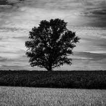 landscape-27.jpg