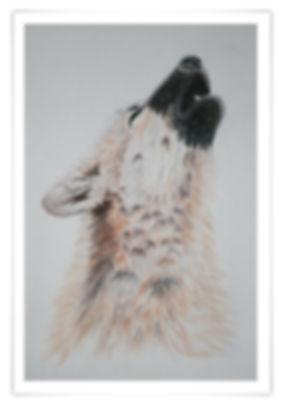Zeichnung Sketch Ölkreide heulender Wolf howling wolf