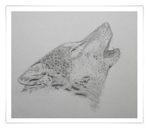 Zeichnung Sketch Bleistift heulender Wolf howling wolf