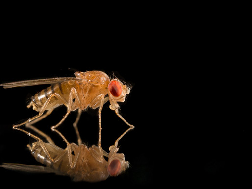 The Impact of Inhaled Pollution on Health Outcomes in Drosophila Melanogaster