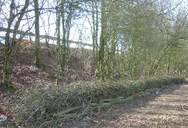 Arboriculture & Landscaping
